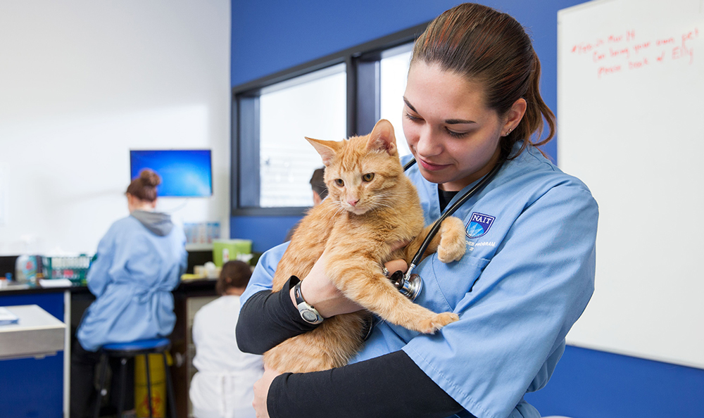 Animal Health Student with a cat